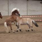 Das Pferd als Trainer